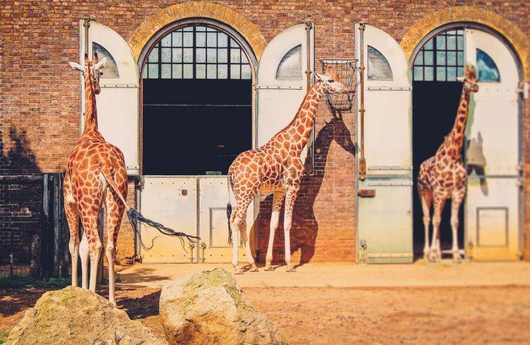 Kauno Zoologijos sodas, kurį verta aplankyti